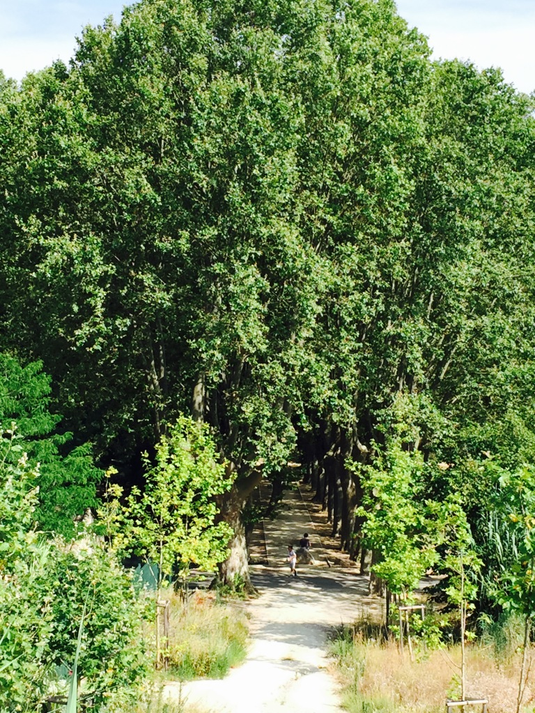 There is a beautifully lined path of century-old trees at the park that offer shade for the casual walk thru the park.